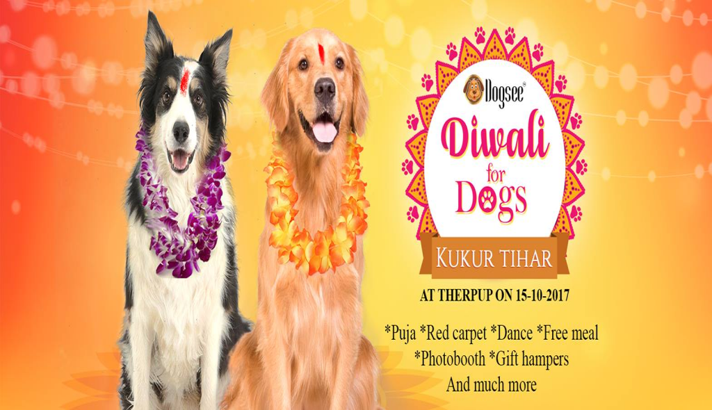 Diwali for Dogs by Dogsee (Kukur Tihar)
