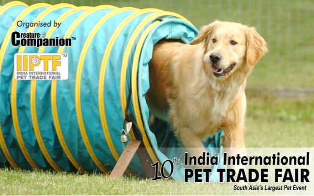 IIPTF Pet Festival
