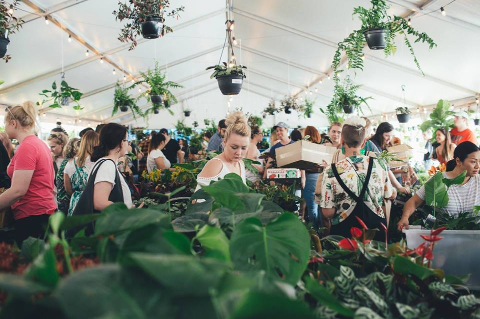 Brisbane - Huge Indoor Plant Warehouse Sale - Pet Friendly Focus