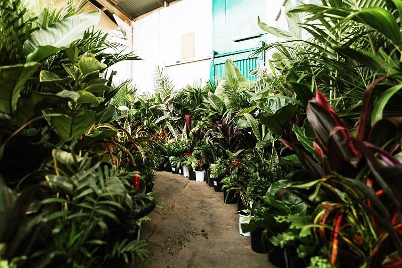 Adelaide - Huge Indoor Plant Sale - Springtime Splendour
