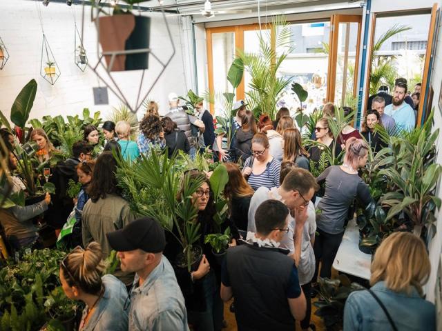Melbourne - Huge Indoor Plant Warehouse Sale - Spring Jungle