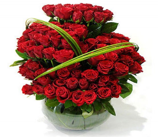 Red Beauty Roses